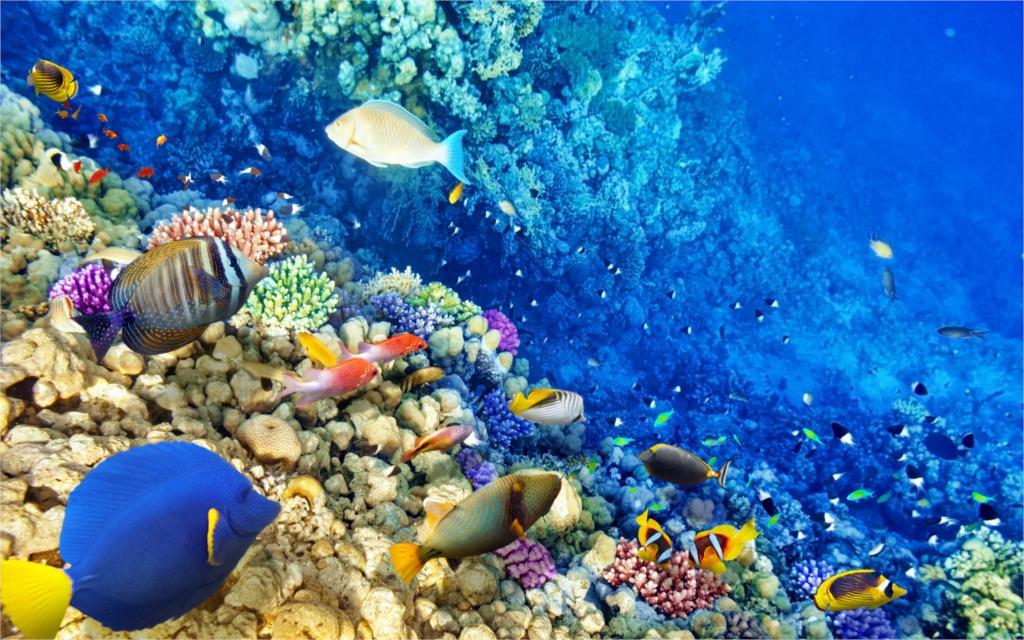 Упаковка Dell спасает океан