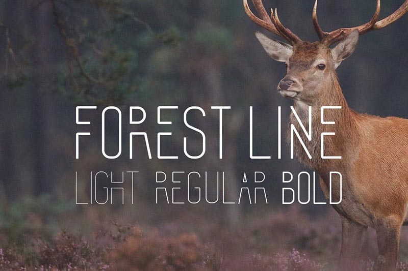 Forest-Line