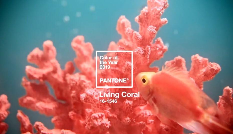 Sedia Pantone Rosa : Цвет года по версии pantone Как применять его в макияже
